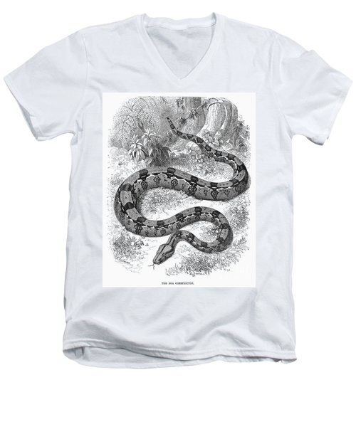 Boa Constrictor Men's V-Neck T-Shirt by Granger