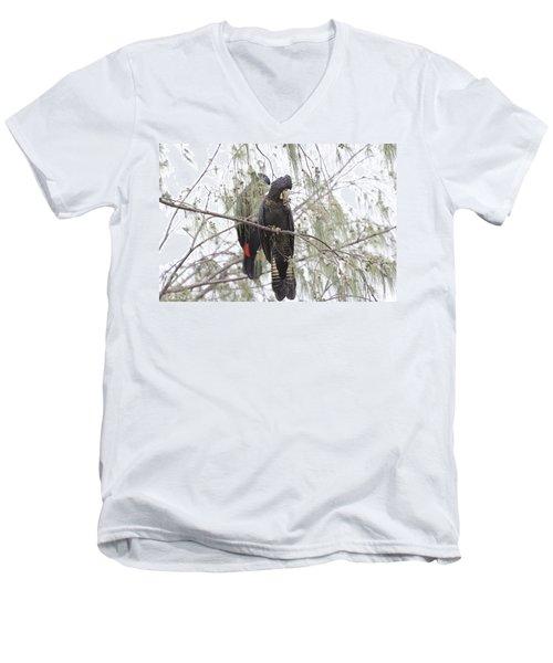 Red Tailed Black Cockatoos Men's V-Neck T-Shirt by Douglas Barnard