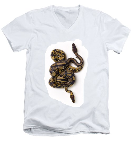 Two Ball Python Snakes Intertwined Men's V-Neck T-Shirt by Corey Hochachka