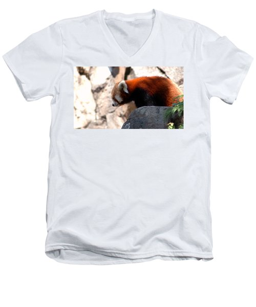 Valley Of The Red Panda Men's V-Neck T-Shirt by LeeAnn McLaneGoetz McLaneGoetzStudioLLCcom