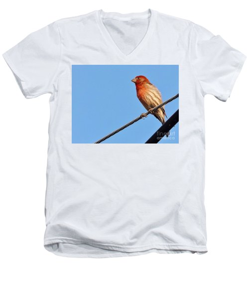 American Crossbill On Wire     Spring   Indiana   Men's V-Neck T-Shirt by Rory Cubel
