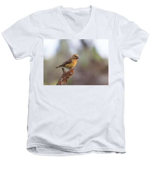 Juvenile Male Red Crossbill Men's V-Neck T-Shirt by Doug Lloyd