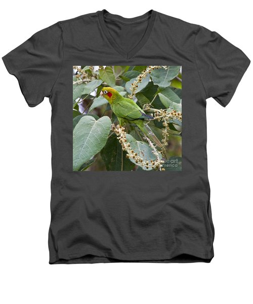 Chiriqui Conure 2 Men's V-Neck T-Shirt by Heiko Koehrer-Wagner