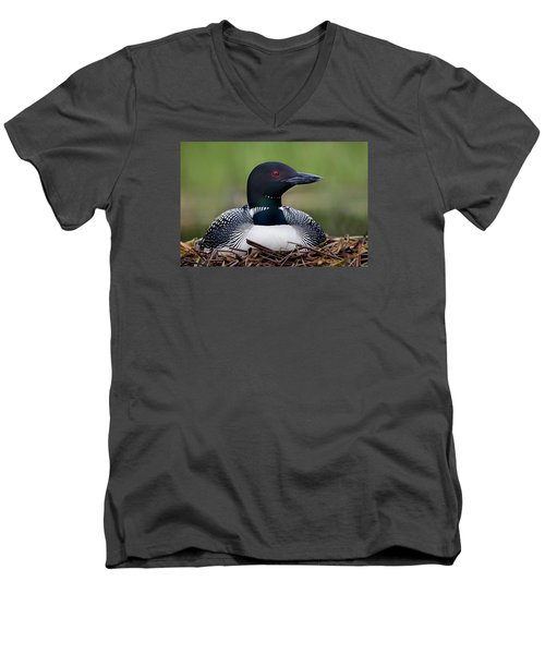 Common Loon On Nest British Columbia Men's V-Neck T-Shirt by Connor Stefanison