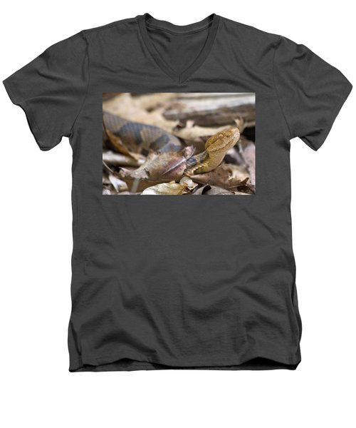 Copperhead In The Wild Men's V-Neck T-Shirt by Betsy Knapp