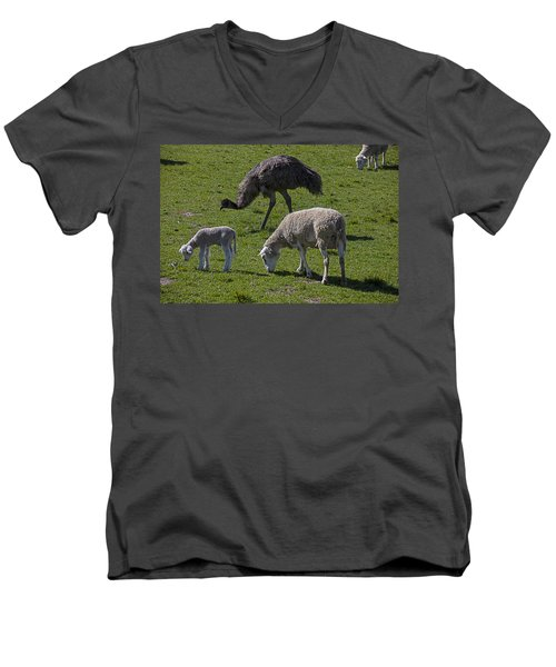 Emu And Sheep Men's V-Neck T-Shirt by Garry Gay