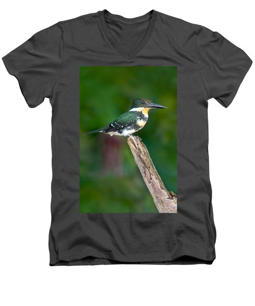 Green Kingfisher Chloroceryle Men's V-Neck T-Shirt by Panoramic Images