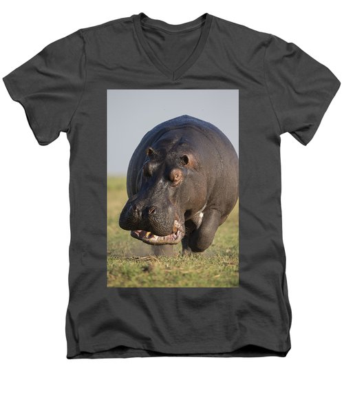 Hippopotamus Bull Charging Botswana Men's V-Neck T-Shirt by Vincent Grafhorst