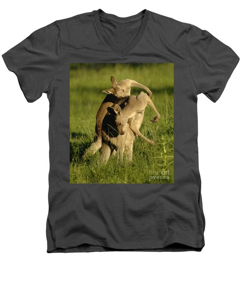 Kangaroos Taking A Bow Men's V-Neck T-Shirt by Bob Christopher