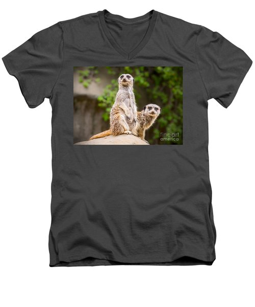 Meerkat Pair Men's V-Neck T-Shirt by Jamie Pham