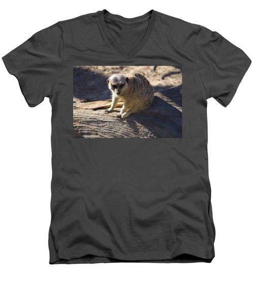 Meerkat Resting On A Rock Men's V-Neck T-Shirt by Chris Flees
