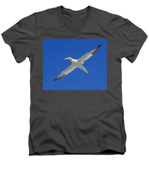 Northern Gannet Men's V-Neck T-Shirt by Tony Beck