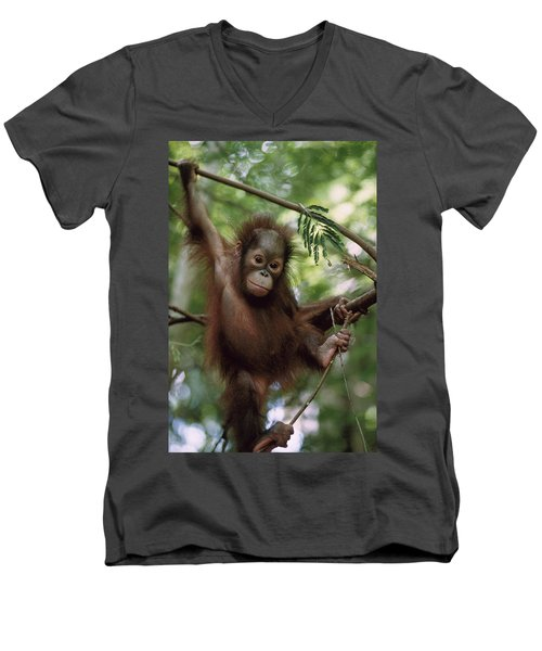 Orangutan Infant Hanging Borneo Men's V-Neck T-Shirt by Konrad Wothe