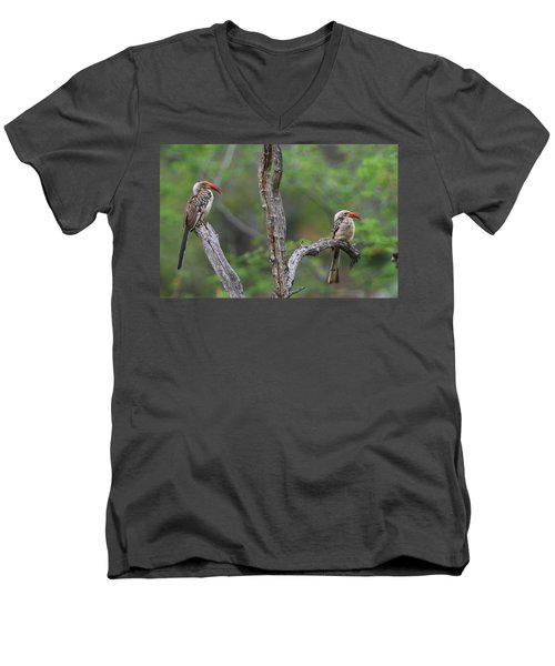 Red-billed Hornbills Men's V-Neck T-Shirt by Bruce J Robinson