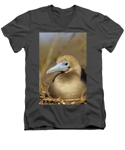 Red-footed Booby Incubating Eggs Men's V-Neck T-Shirt by Tui De Roy