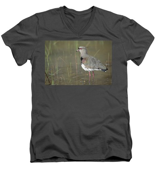 Southern Lapwing In Marshland Pantanal Men's V-Neck T-Shirt by Tui De Roy