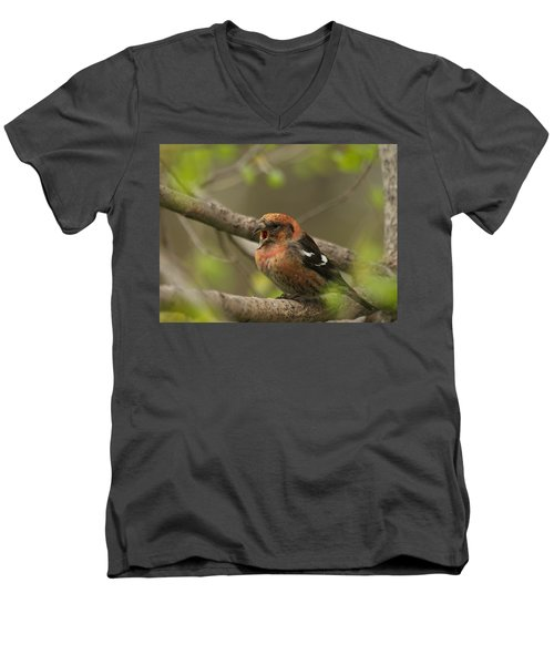 White-winged Crossbill Men's V-Neck T-Shirt by James Peterson