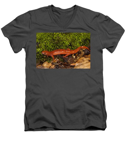 Red Salamander Pseudotriton Ruber Men's V-Neck T-Shirt by Pete Oxford