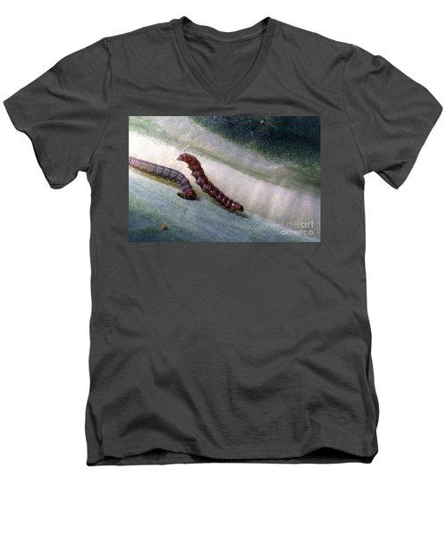 Diamondback Moth Larvae Men's V-Neck T-Shirt by Science Source
