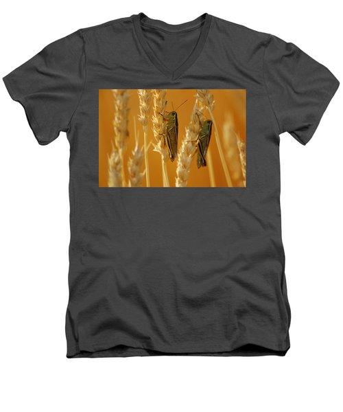 Grasshoppers On Wheat, Treherne Men's V-Neck T-Shirt by Mike Grandmailson