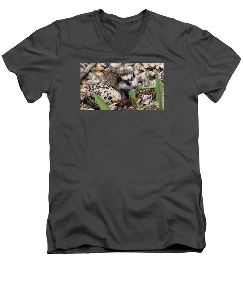 Killdeer Baby - Photo 25 Men's V-Neck T-Shirt by Travis Truelove