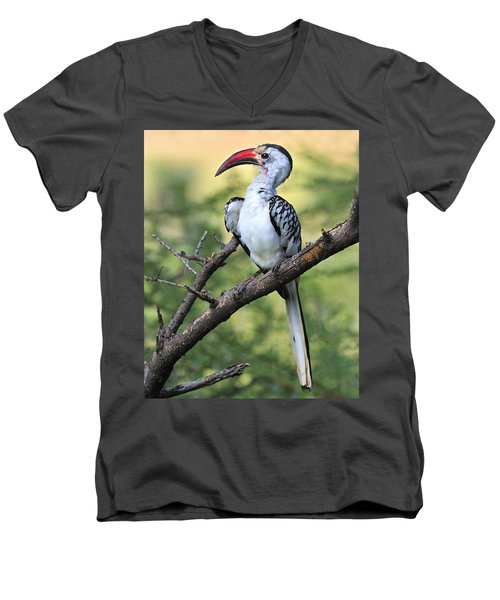 Red-billed Hornbill Men's V-Neck T-Shirt by Tony Beck