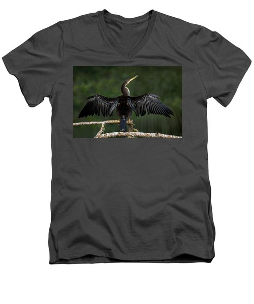 Anhinga Anhinga Anhinga Perching Men's V-Neck T-Shirt by Panoramic Images
