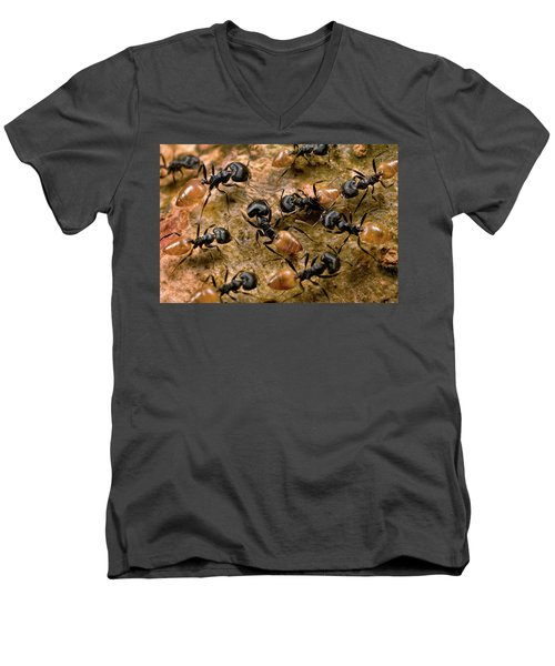 Ant Crematogaster Sp Group Men's V-Neck T-Shirt by Mark Moffett