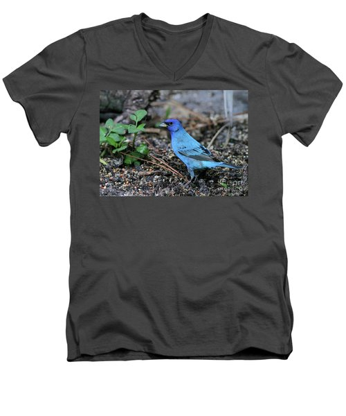 Beautiful Indigo Bunting Men's V-Neck T-Shirt by Sabrina L Ryan