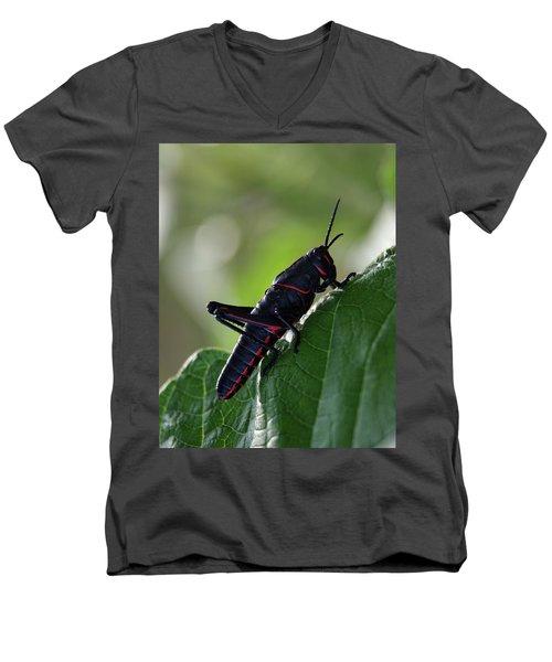 Eastern Lubber Grasshopper Men's V-Neck T-Shirt by Richard Rizzo