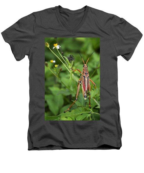 Eastern Lubber Grasshopper  Men's V-Neck T-Shirt by Saija  Lehtonen
