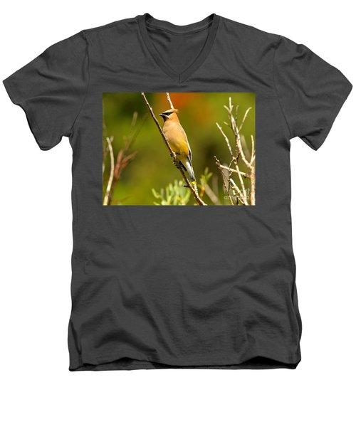 Glacier Cedar Waxwing Men's V-Neck T-Shirt by Adam Jewell