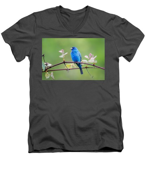 Indigo Bunting Perched Men's V-Neck T-Shirt by Bill Wakeley