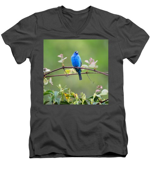 Indigo Bunting Perched Square Men's V-Neck T-Shirt by Bill Wakeley