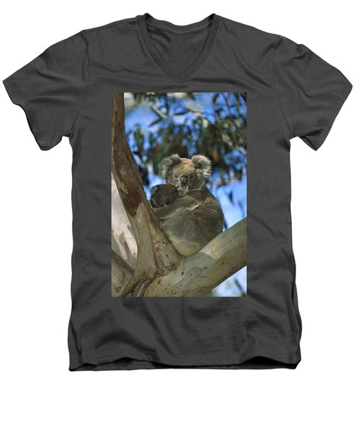 Koala Phascolarctos Cinereus Mother Men's V-Neck T-Shirt by Konrad Wothe