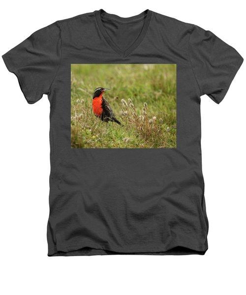 Long-tailed Meadowlark Men's V-Neck T-Shirt by Bruce J Robinson