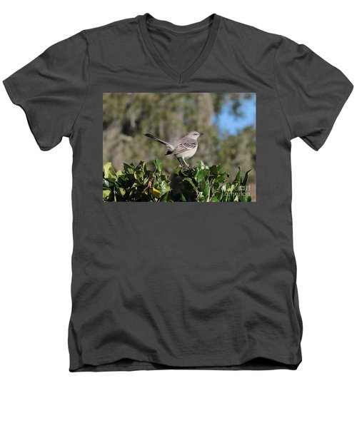 Northern Mockingbird Men's V-Neck T-Shirt by Carol Groenen