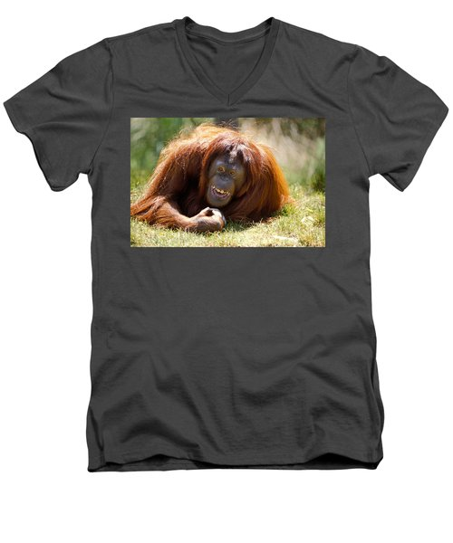 Orangutan In The Grass Men's V-Neck T-Shirt by Garry Gay