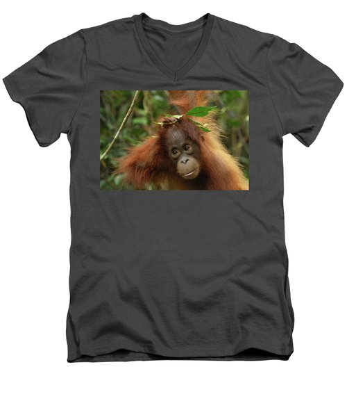Orangutan Pongo Pygmaeus Baby, Camp Men's V-Neck T-Shirt by Thomas Marent