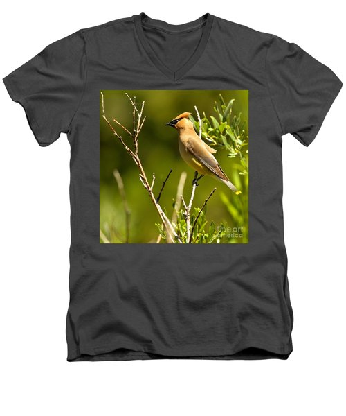 Perfectly Perched Men's V-Neck T-Shirt by Adam Jewell
