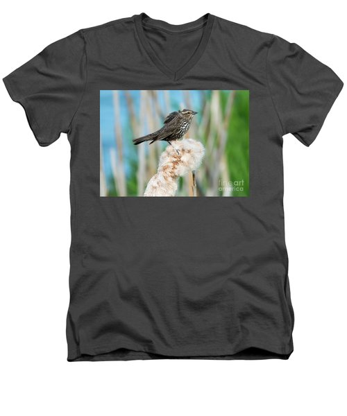 Ruffled Feathers Men's V-Neck T-Shirt by Mike Dawson