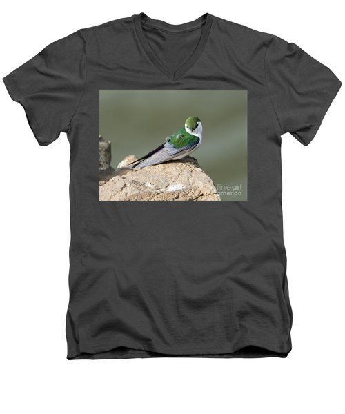 Violet-green Swallow Men's V-Neck T-Shirt by Mike Dawson