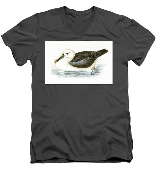 Yellow Nosed Albatross Men's V-Neck T-Shirt by English School