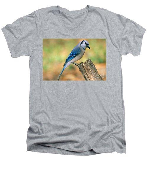 Blue Jay Men's V-Neck T-Shirt by Millard H. Sharp