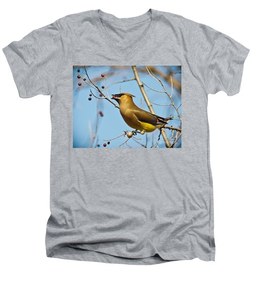 Cedar Waxwing With Berry Men's V-Neck T-Shirt by Robert Frederick