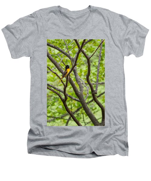 Baltimore Oriole Men's V-Neck T-Shirt by Bill Wakeley
