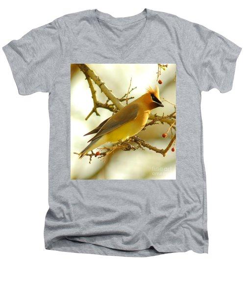 Cedar Waxwing Men's V-Neck T-Shirt by Robert Frederick