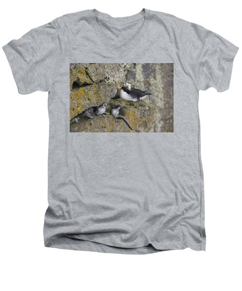 Least Auklets Perched On A Narrow Ledge Men's V-Neck T-Shirt by Milo Burcham