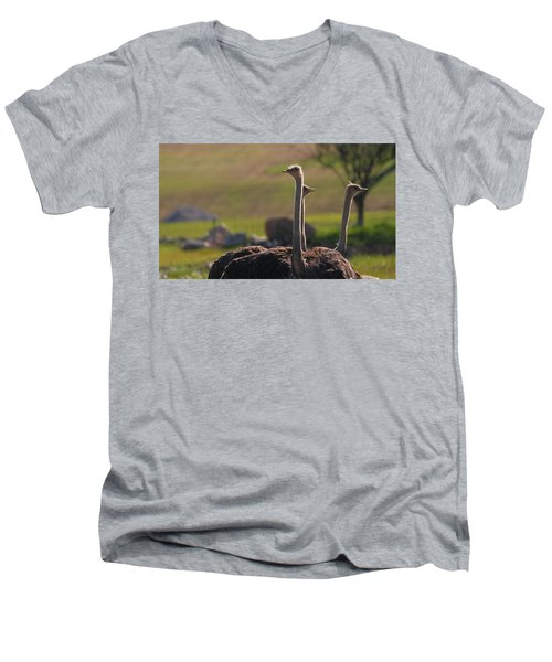 Ostriches Men's V-Neck T-Shirt by Dan Sproul