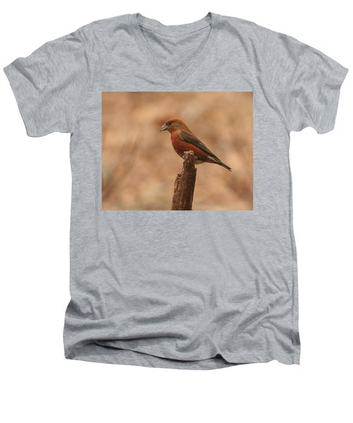 Red Crossbill Men's V-Neck T-Shirt by Charles Owens